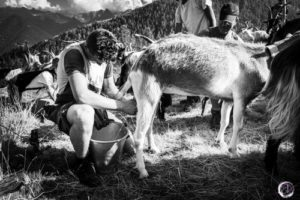 Valtellina ed i suoi alpeggi- Il Bitto articolo blog Elisa Valdambrini Photography