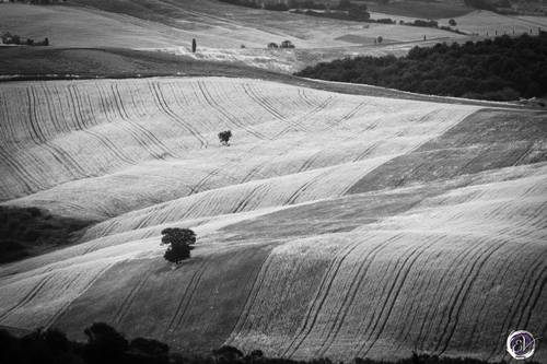 Val D'Orcia texture